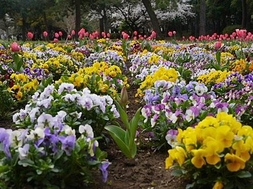 別府の桜 その3 別府公園で春の花と出会ってきました_b0175688_2305974.jpg