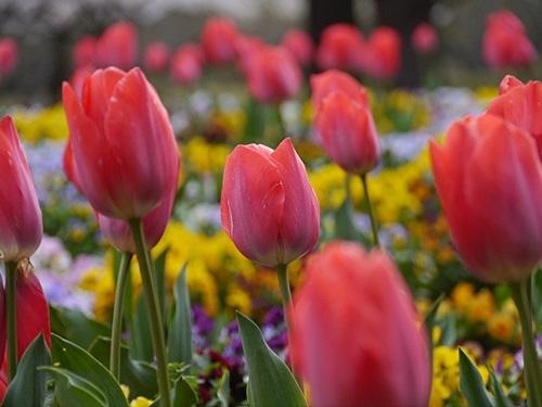 別府の桜 その3 別府公園で春の花と出会ってきました_b0175688_2312053.jpg