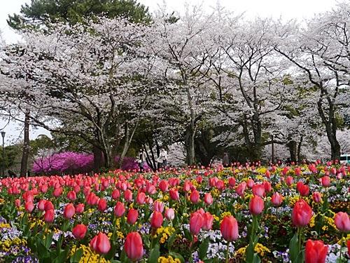 別府の桜 その3 別府公園で春の花と出会ってきました_b0175688_2313132.jpg