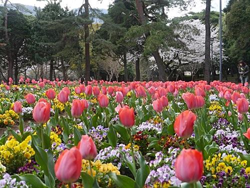 別府の桜 その3 別府公園で春の花と出会ってきました_b0175688_231999.jpg