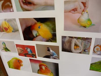 神戸花鳥園・作品写真撮影会レポート_d0123492_2285073.jpg