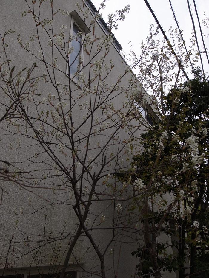 春の花-2_f0223603_19464148.jpg