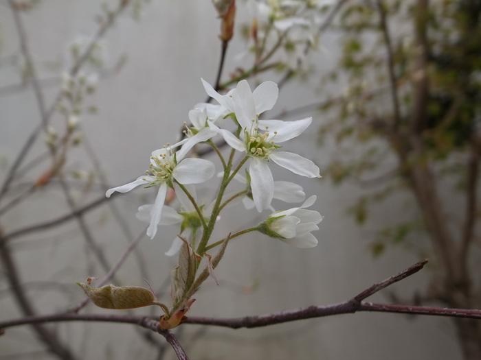 春の花-2_f0223603_19472274.jpg