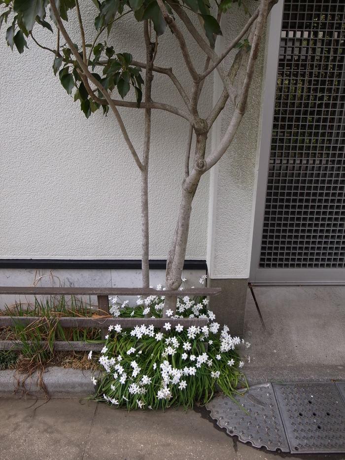 春の花-2_f0223603_1947318.jpg