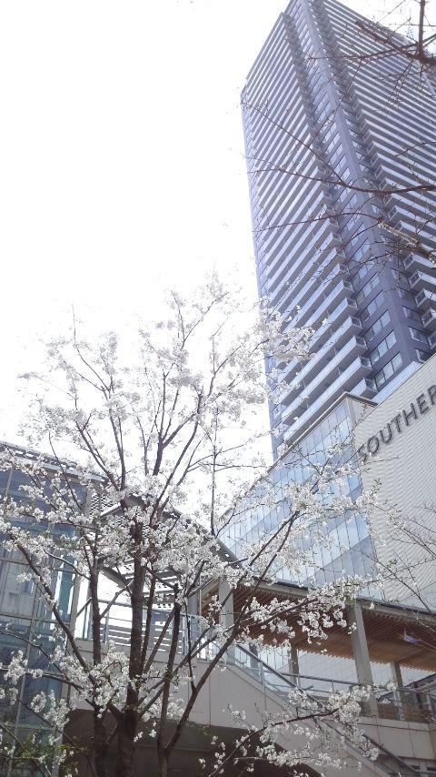 八王子駅前のサクラ_f0155808_9282815.jpg