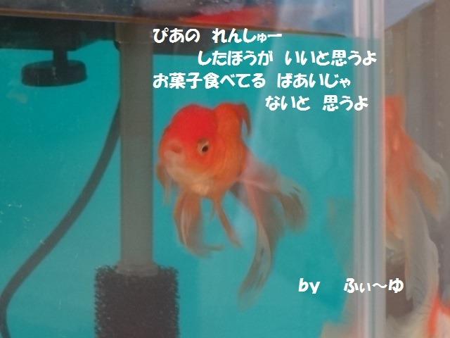 ふぃ~ゆのつぶやき_d0165645_20404.jpg