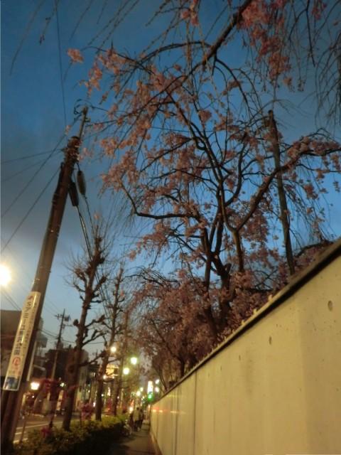 桜の木の小さな顔_d0079147_18294688.jpg