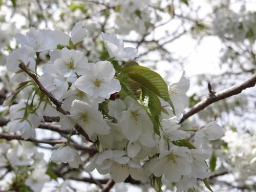 花の散る ②_e0240147_18224464.jpg
