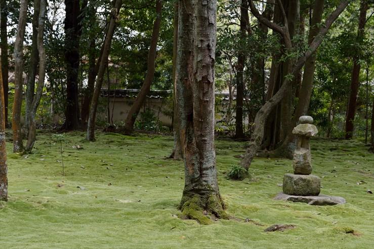 奈良旅行 その2 秋篠寺_e0170058_16524155.jpg
