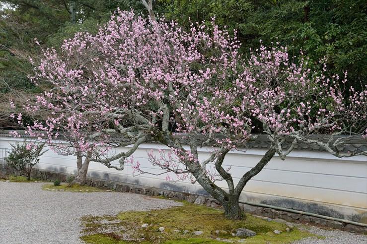 奈良旅行 その2 秋篠寺_e0170058_16525897.jpg