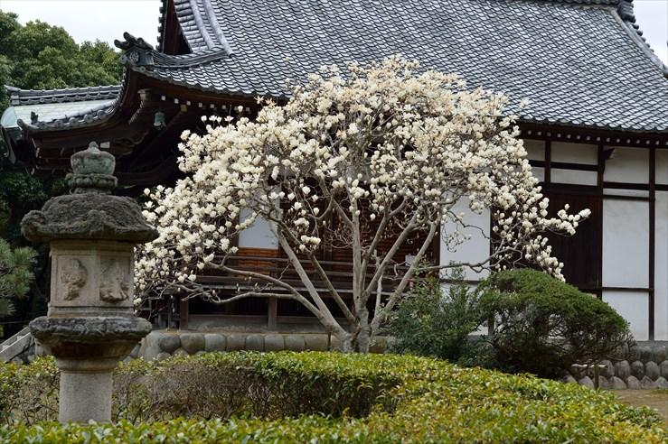 奈良旅行 その2 秋篠寺_e0170058_16531189.jpg