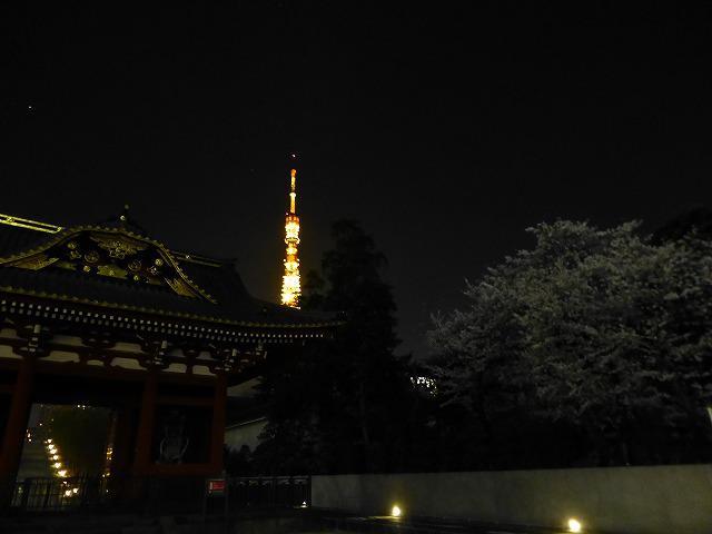 東京タワーと桜♪_c0100865_1394332.jpg