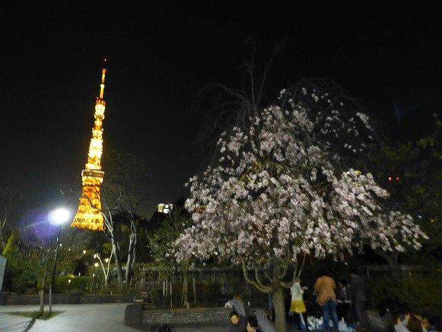 東京タワーと桜♪_c0100865_163956.jpg