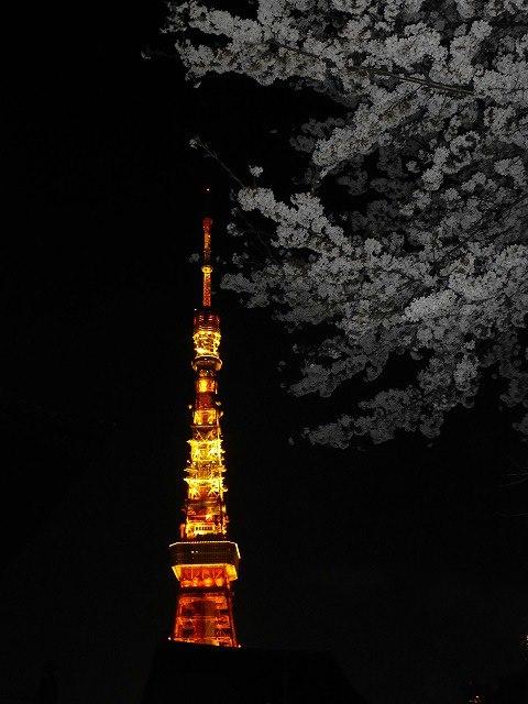 東京タワーと桜♪_c0100865_171840.jpg