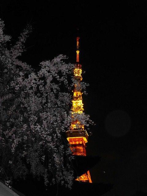 東京タワーと桜♪_c0100865_173094.jpg
