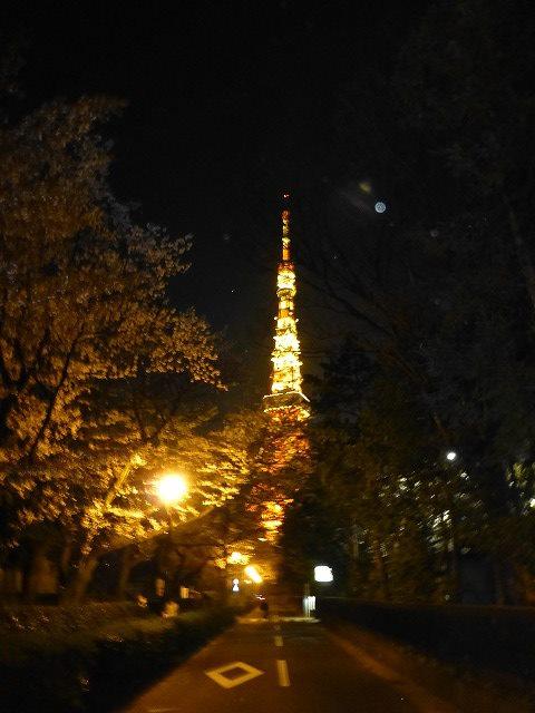 東京タワーと桜♪_c0100865_174012.jpg