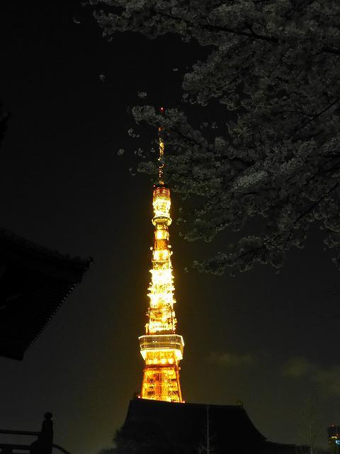東京タワーと桜♪_c0100865_17667.jpg