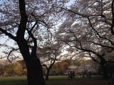 お花見(o^^o)☆代々木公園_c0151965_1684317.jpg
