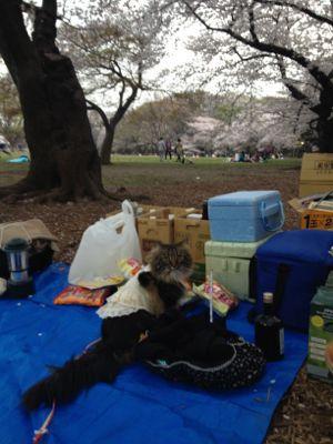 お花見(o^^o)☆代々木公園_c0151965_1684437.jpg