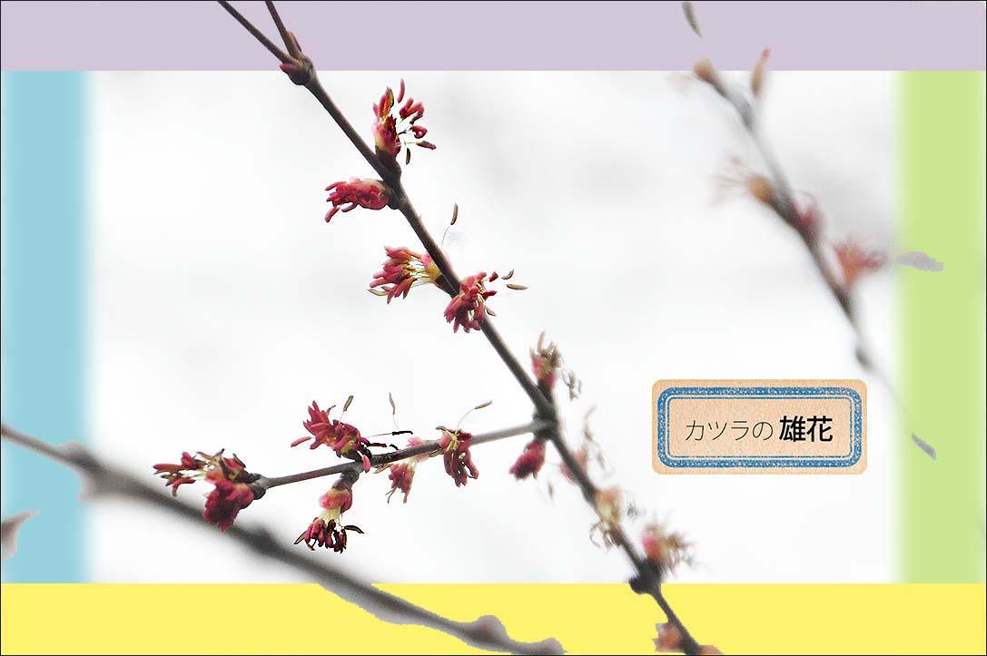 f0198771_0121377.jpg