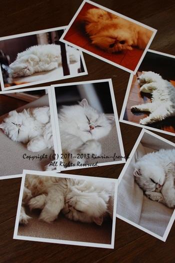 愛猫 あくあが 旅立ちました。。。_e0237680_15511570.jpg