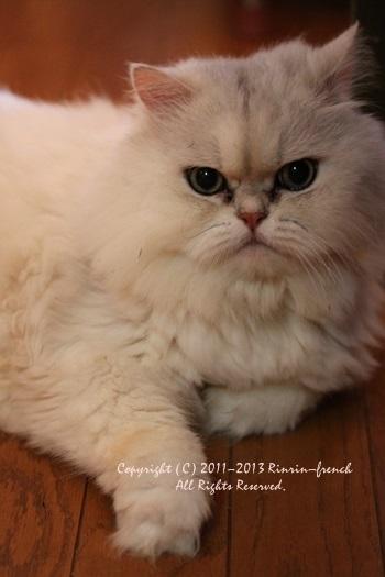 愛猫 あくあが 旅立ちました。。。_e0237680_15583079.jpg
