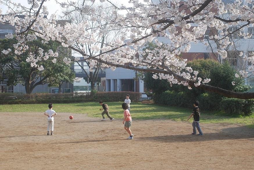 桜満開_c0187781_1482119.jpg