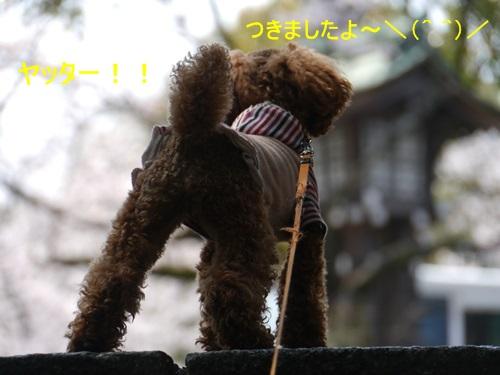 ♪♪さくら♪♪との~んびり。。。(^_^)ニコニコ _b0175688_23213113.jpg