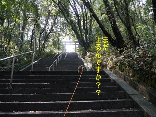 ♪♪さくら♪♪との~んびり。。。(^_^)ニコニコ _b0175688_23215053.jpg