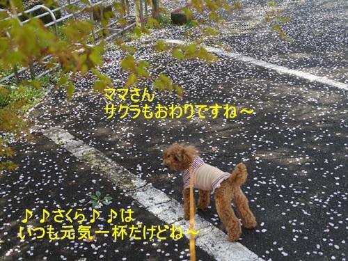♪♪さくら♪♪との~んびり。。。(^_^)ニコニコ _b0175688_2328679.jpg