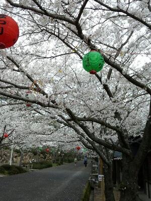 桜、木蓮、チューリップ~春~_a0155290_23135763.jpg