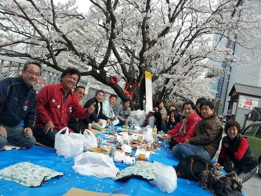 私は桜が大好きですが、今年の堀川の桜は特別です!_c0186691_2291744.jpg