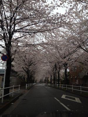 お花見♡_e0249196_23405471.jpg