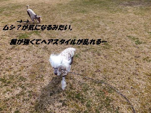 f0179203_2193539.jpg