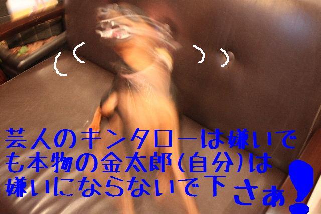 b0130018_10131423.jpg