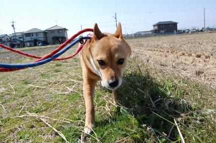 3/26 お散歩_e0236430_23245259.jpg