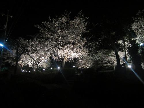 夜桜_b0207631_10381041.jpg