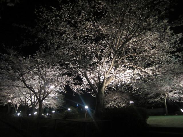 夜桜_b0207631_10491414.jpg