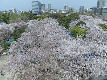 今日の舞鶴公園3月30日_e0149436_20214666.jpg