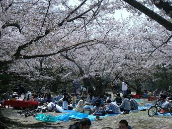 今日の舞鶴公園3月30日_e0149436_20222514.jpg