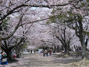 今日の舞鶴公園3月30日_e0149436_20224380.jpg