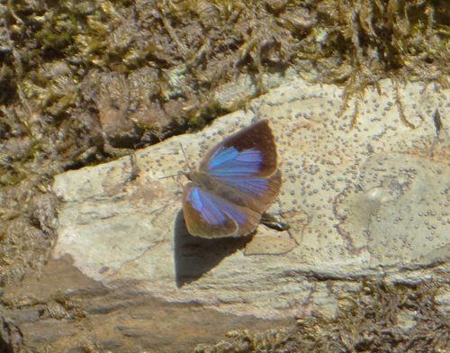 ギフチョウ他 今日の北山湿地_d0254540_135729.jpg