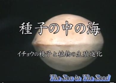 あえてこの作品「種子のの中の海 イチョウの精子と植物の生殖しんか」_b0115553_1741339.png