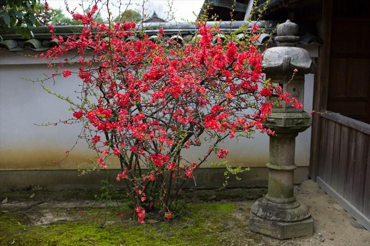 奈良旅行 その3 法華寺_e0170058_1935492.jpg