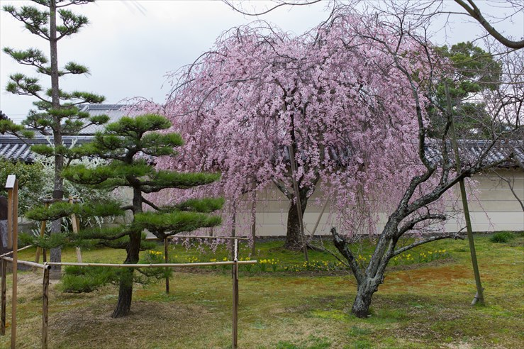 奈良旅行 その3 法華寺_e0170058_1943523.jpg