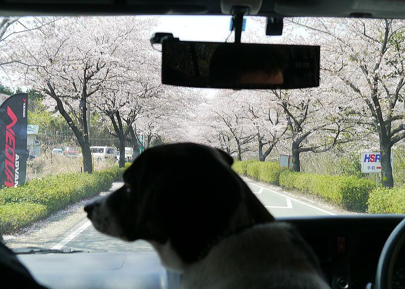 九州ロード&モタードエリア戦_f0178858_16375551.jpg