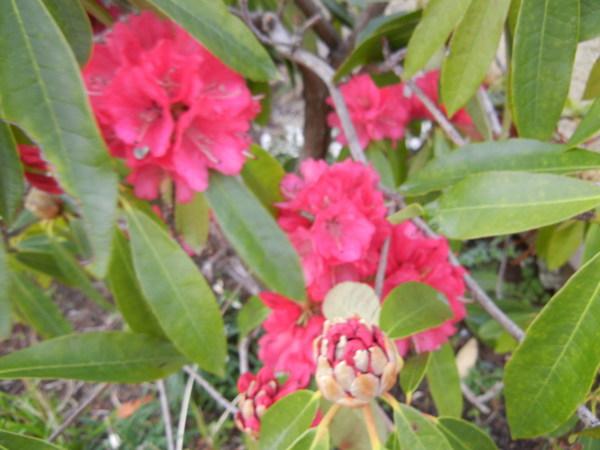 '13,3,30(土)今日も春の花、満載ですYO!_f0060461_13455441.jpg