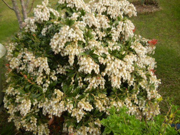 '13,3,30(土)今日も春の花、満載ですYO!_f0060461_13483238.jpg