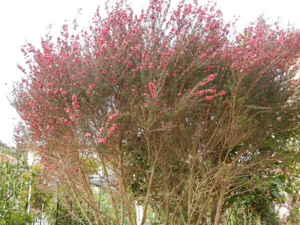 '13,3,30(土)今日も春の花、満載ですYO!_f0060461_1350754.jpg