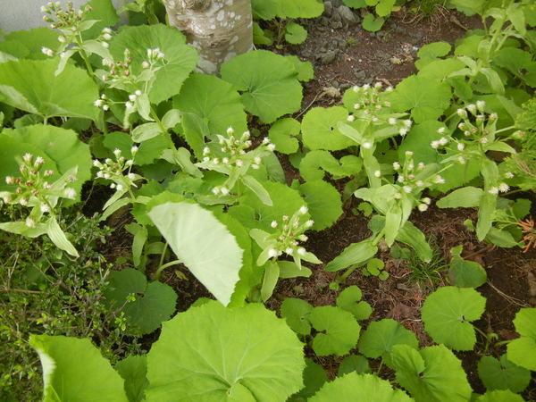 '13,3,30(土)今日も春の花、満載ですYO!_f0060461_1424755.jpg